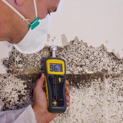 Mold Inspector assessing Wall