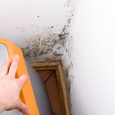 Mold seeping through white wall