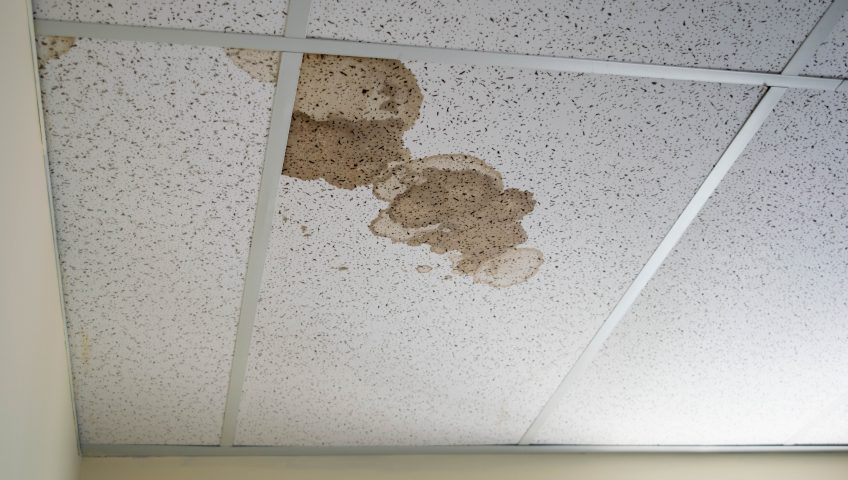 Mold on Office ceiling